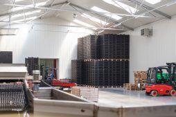 wnętrze hali 1 - sortownia i przechowalnia owoców z częścią biurową, dla Gaik, Witalówka