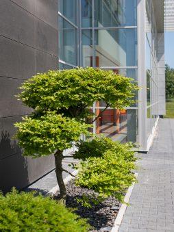 aranżacja zieleni przed wejściem do budynku 1 - hala produkcyjno-magazynowa z budynkiem biurowym, dla Polamp, Bieniewiec