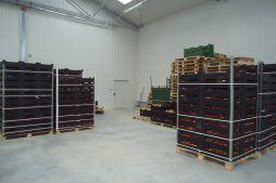 wnętrze hali 13 - sortownia i przechowalnia owoców z częścią biurową, dla Gaik, Witalówka